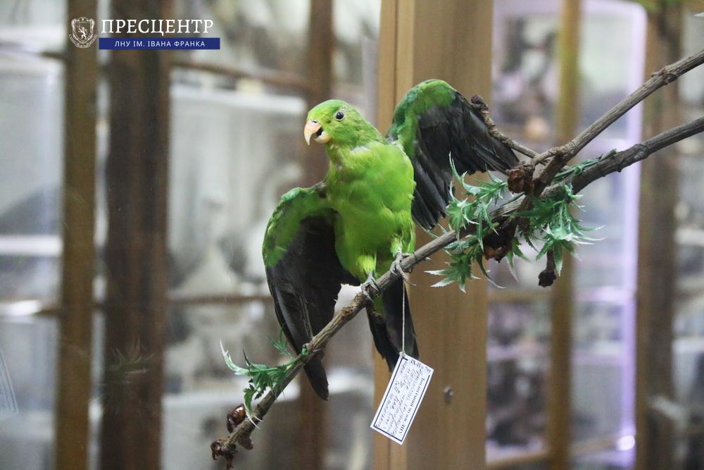 Світ після юрського періоду: які дива колекціонує Зоологічний музей Львівського університету
